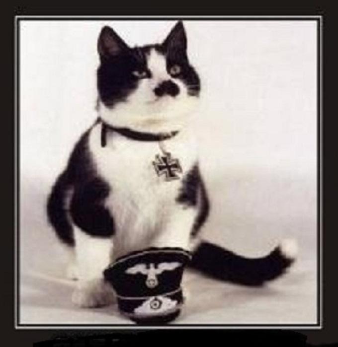 Cat Hitler CROPPED BLANK