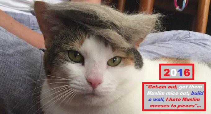 Cat Trump hate Muslim Meese's