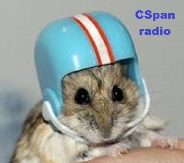 Gerbil with helmet ~ CSpan radio ~
